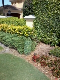 San-Diego-faux-finisher-muralist-shrubbery-camouflage-Art-by-Beata